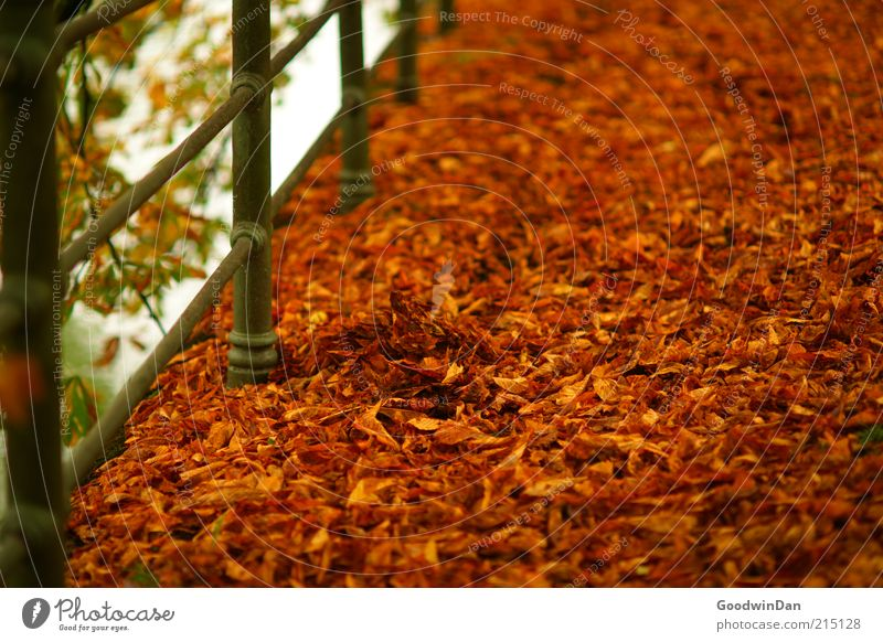 Nature Beautiful Red Leaf Autumn Park Warmth Moody Brown Environment Gold Many Handrail Autumn leaves Autumnal Autumnal colours