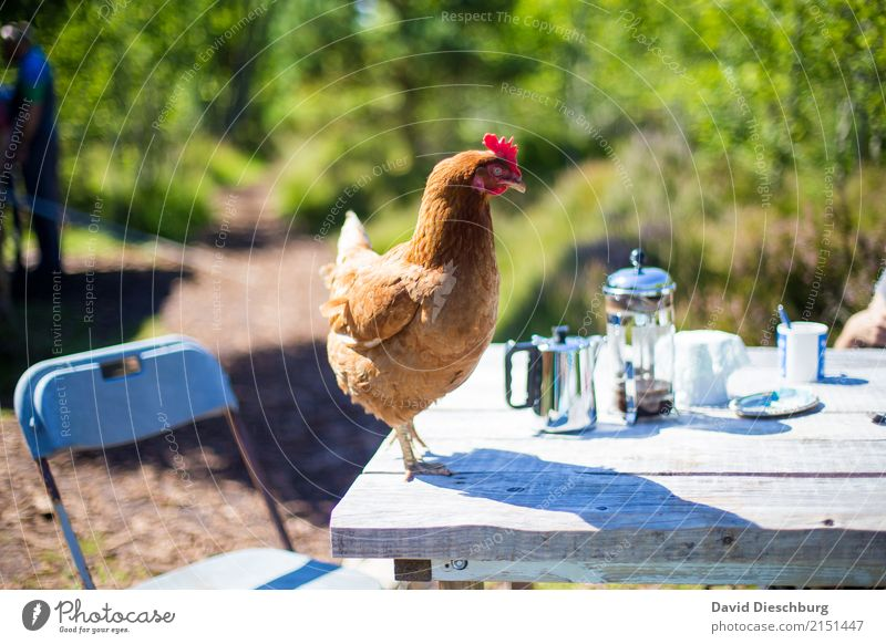 Nature Vacation & Travel Summer Animal Spring Funny Happy Tourism Brown Trip Contentment Nutrition Idyll Table Beautiful weather Agriculture