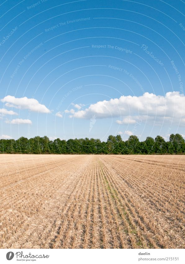 field after the yield of wheat Landscape Sky Clouds Horizon Autumn Beautiful weather Plant Agricultural crop Field Blue Harvest Wheatfield Colour photo