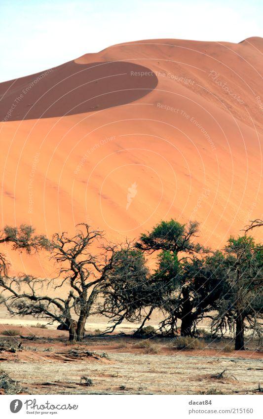 Namib Landscape Plant Sand Summer Climate Beautiful weather Warmth Drought Desert Oasis Calm Endurance Longing Tree Namibia Namib desert Sossusvlei