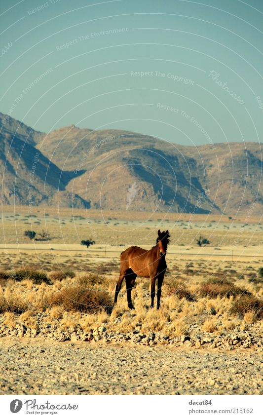 Beautiful Blue Animal Yellow Emotions Mountain Landscape Brown Fear Gold Horse Gloomy Longing Wild animal Timidity Steppe