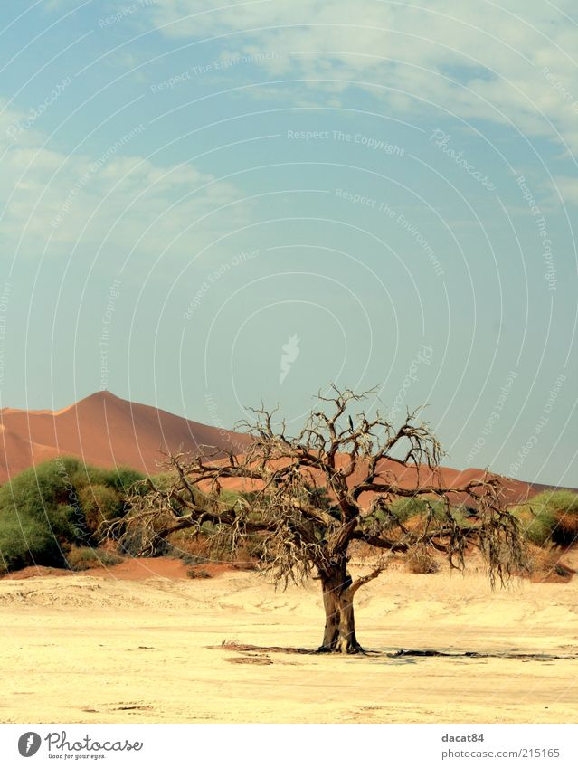 Death of the Tree Environment Nature Landscape Plant Elements Earth Sand Sky Summer Climate Weather Beautiful weather Bushes Desert Oasis Hot Emotions