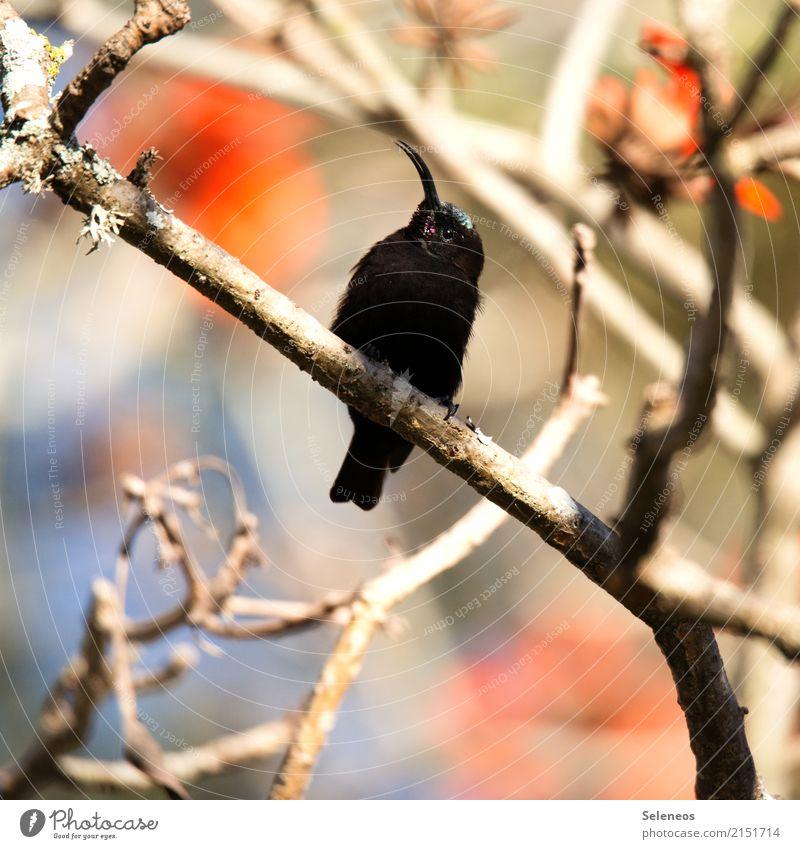 amethsyt Vacation & Travel Tourism Trip Far-off places Summer Tree Blossom Branchage Garden Park Animal Wild animal Bird Animal face Beak nectar bird 1 Observe