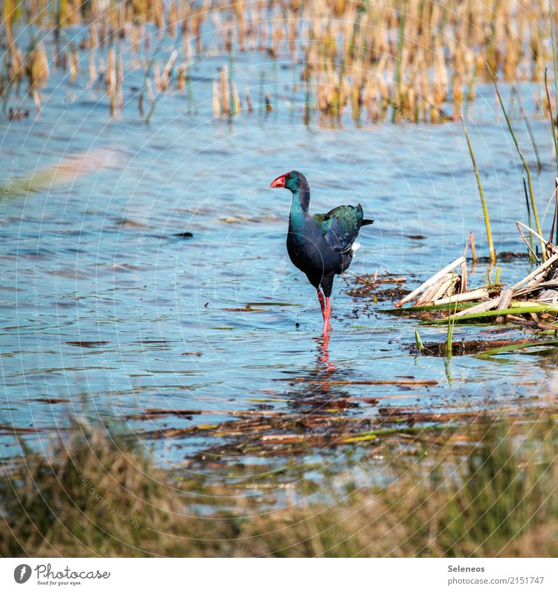 Water Animal Far-off places Environment Natural Coast Freedom Lake Bird Trip Wild animal River Lakeside River bank Exotic Expedition
