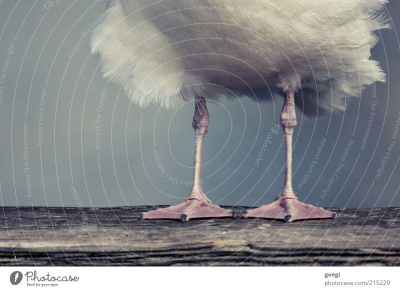 Animal Wood Legs Bird Wait Stand Feather Wooden board Seagull Claw Joist Webbing