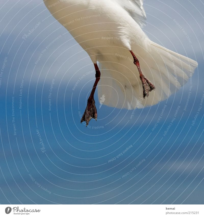 Sandy feet Nature Animal Sky Clouds Sunlight Summer Beautiful weather Wild animal Bird Seagull Animal foot Feather Tails tail feathers 1 Flying Blue White Hover