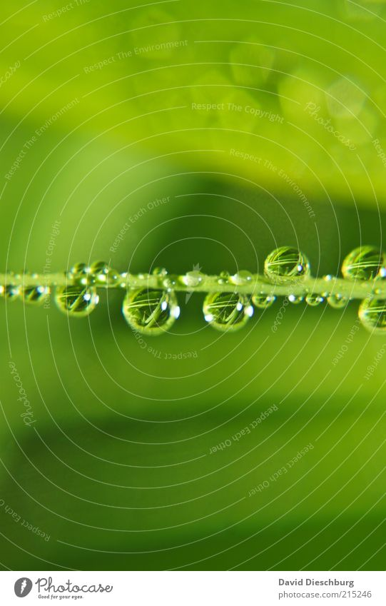 Nature Plant Green Summer Water Life Spring Grass Rain Weather Fresh Drops of water Wet Many Harmonious Sphere