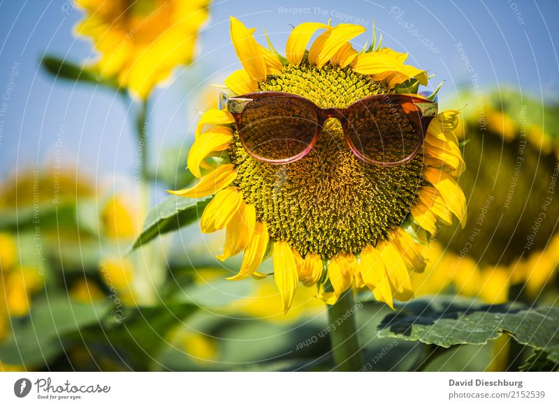 be cool Organic produce Vacation & Travel Summer vacation Agriculture Forestry Nature Plant Animal Cloudless sky Spring Beautiful weather Warmth Flower Blossom
