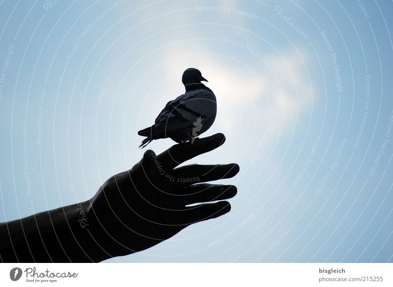 Hand Sky Blue Calm Animal Bird Wait Fingers Sit Peace Watchfulness Pigeon Patient Peaceful Time Love of animals