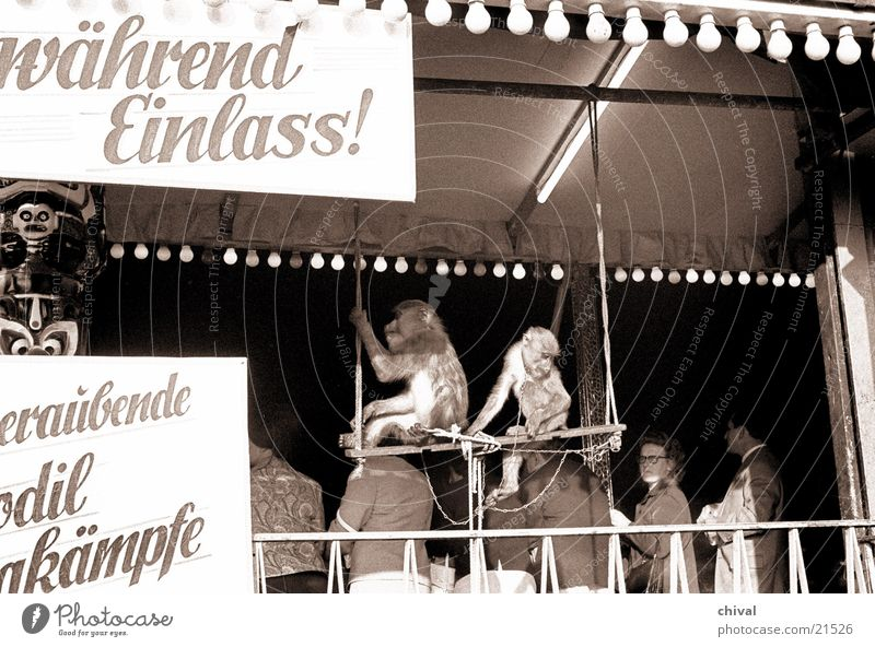 charade Fairs & Carnivals Event Monkeys Entrance Crocodile Visitor Audience Shows Leisure and hobbies Joy Stage play