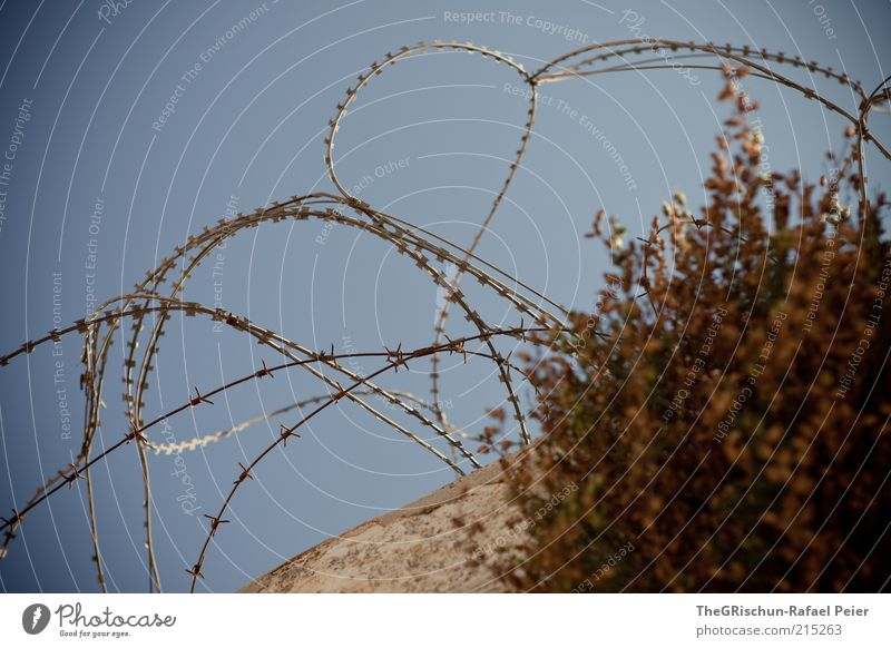 war and peace Israel Blue Brown Gray Barbed wire Barrier Wire Real estate Possessions Colour photo Multicoloured Exterior shot Protection Safety Wall (barrier)