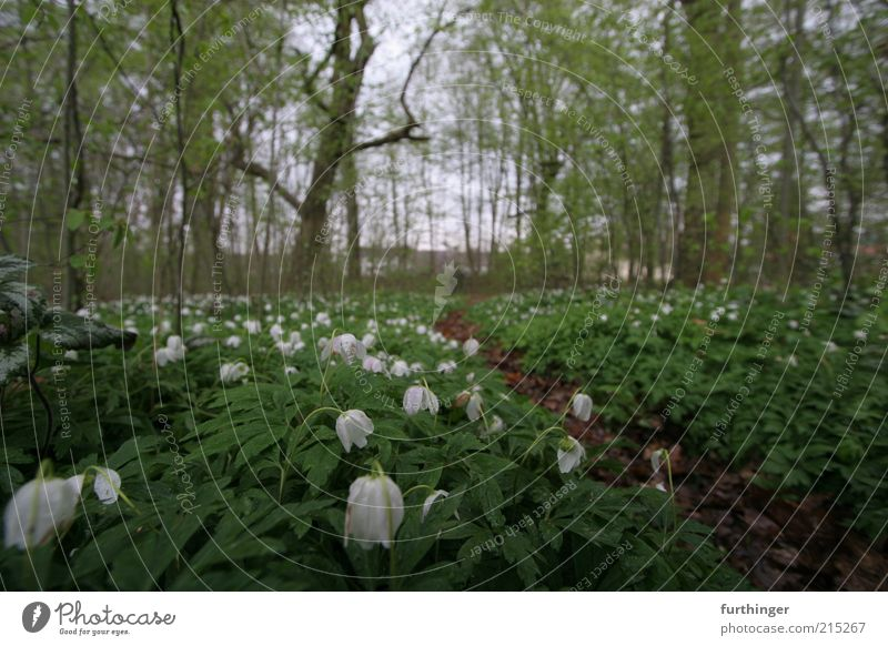 forest ground Environment Nature Landscape Plant Spring Tree Flower Leaf Blossom Foliage plant Wild plant Park Forest Deserted Green White Moody Calm Woodground