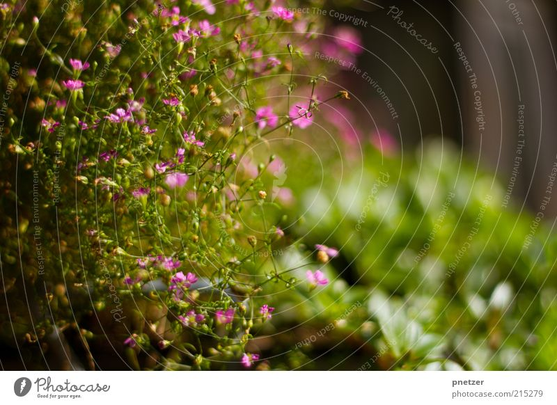 Nature Beautiful Flower Green Plant Summer Leaf Blossom Spring Pink Weather Environment Fresh Violet Natural Exceptional