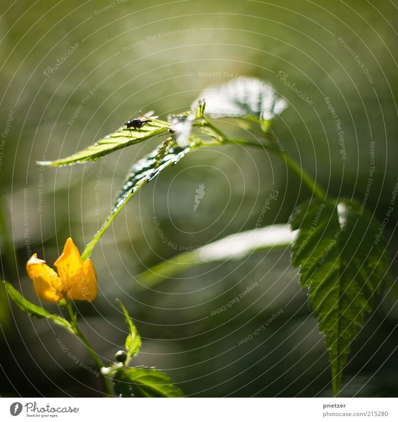Nature Green Plant Summer Leaf Animal Yellow Autumn Emotions Blossom Spring Moody Glittering Fly Weather Environment