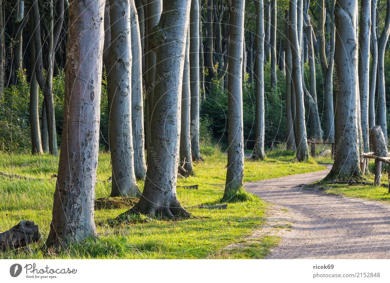 Coastal forest at the Baltic Sea near Nienhagen Relaxation Vacation & Travel Tourism Nature Landscape Tree Grass Forest Lanes & trails Green Romance Idyll