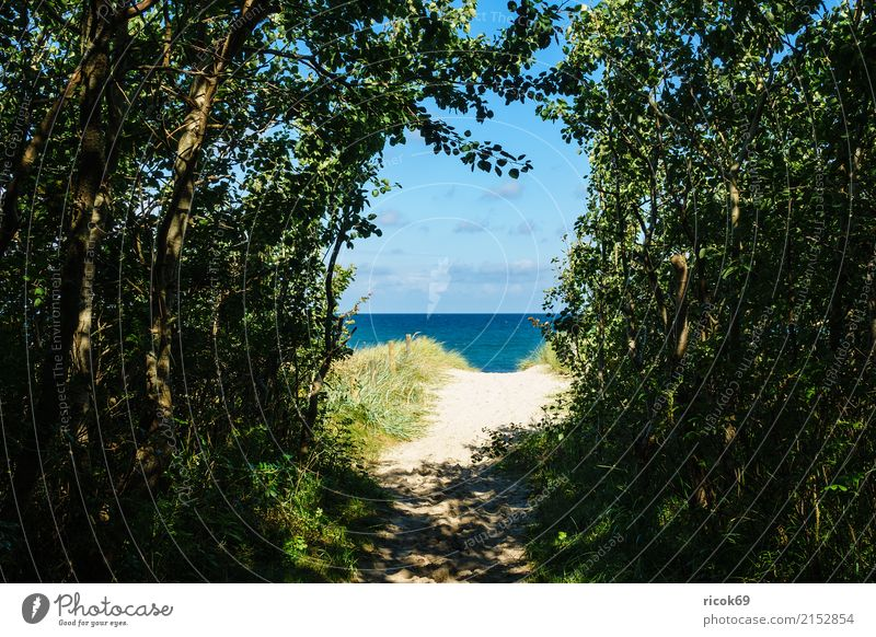 Beach at the Baltic Sea near Graal Müritz Relaxation Vacation & Travel Tourism Ocean Waves Nature Landscape Clouds Weather Tree Coast Lanes & trails Blue
