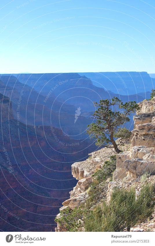 Nature Sky Tree Green Blue Summer Landscape Brown Rock Deep Edge Canyon Mountain Grand Canyon