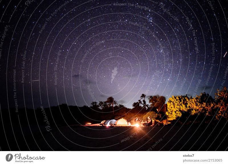 tropical night Vacation & Travel Adventure Freedom Camping Night sky Stars Palm tree Beach Together Relaxation Dream Camp fire atmosphere Nonconformist