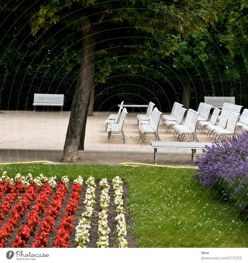 Tree Flower Calm Park Empty Arrangement Lawn Bench Leisure and hobbies Many Garden Row of seats Parallel Inspiration Agreed