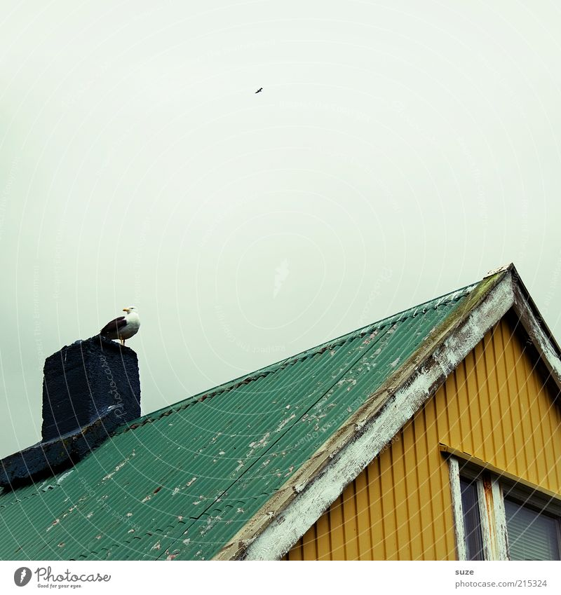 Green Animal House (Residential Structure) Yellow Window Bird Wild animal Sit Roof Hut Seagull Iceland Chimney Flake off Review Gable