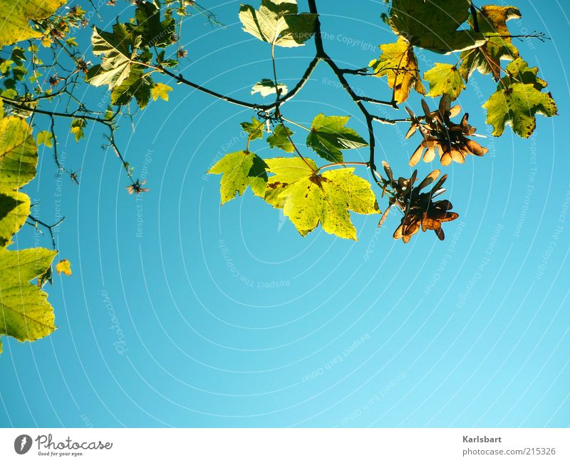autumn air light. Life Calm Environment Nature Sky Cloudless sky Sunlight Autumn Beautiful weather Autumn leaves Branch Neutral Background Colour photo