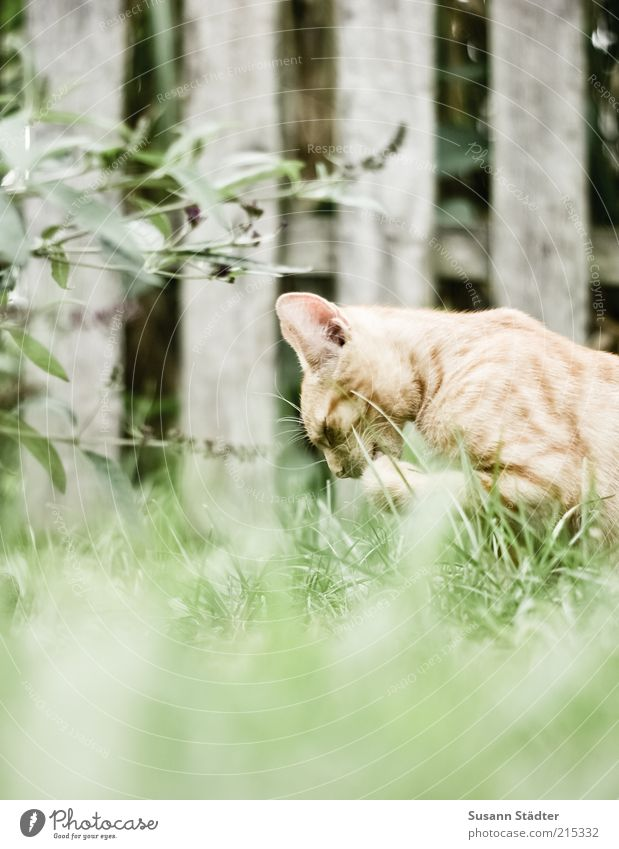 Nature Red Animal Grass Garden Cat Animal face Clean Cleaning Wild animal Fence Narrow Paw Pet Diligent Human being