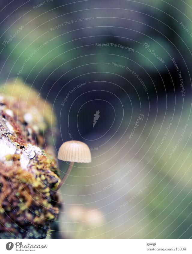 beautiful colors with disturbing mushroom Environment Nature Plant Autumn Tree Moss Mushroom Mushroom cap Bog Marsh Wood Small Colour Colour photo Exterior shot