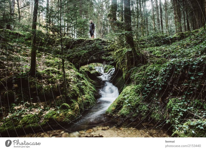 Nature Old Summer Water Green Relaxation Calm Forest Lifestyle Exceptional Freedom Trip Contentment Leisure and hobbies Wild