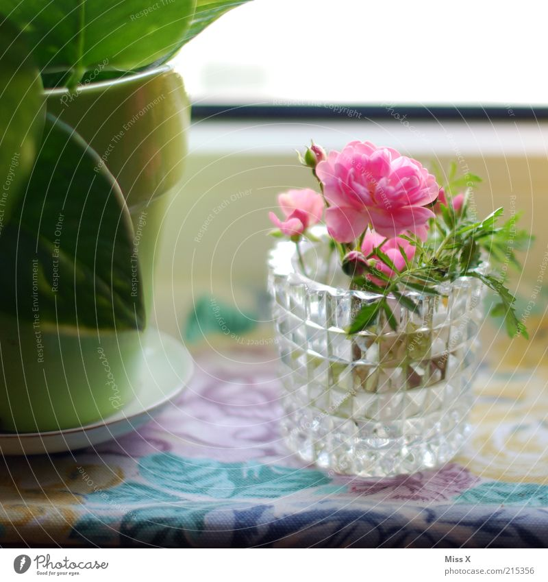 Flowers for Luis Living or residing Decoration Leaf Blossom Pot plant Blossoming Fragrance Growth Delicate Colour photo Multicoloured Interior shot Close-up