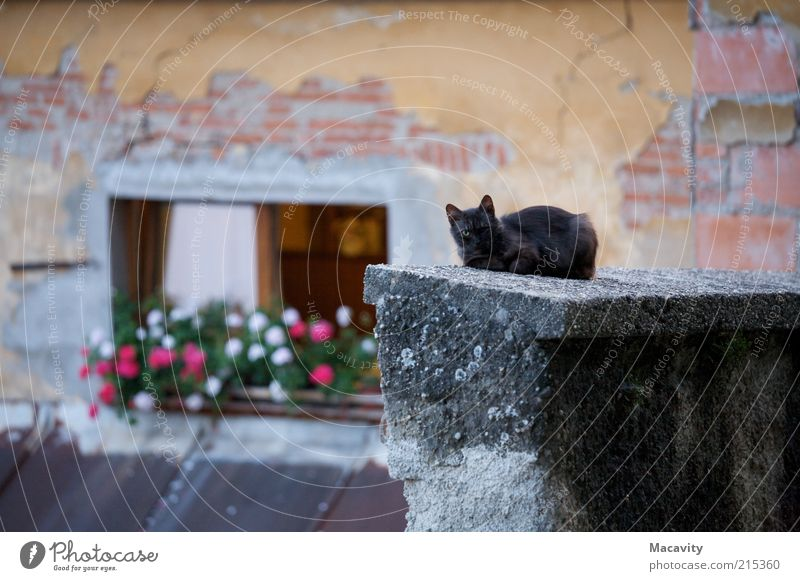 Cat Old Loneliness Calm Window Wall (building) Eyes Wall (barrier) Gray Brown Fear Roof Decline End Watchfulness Brick
