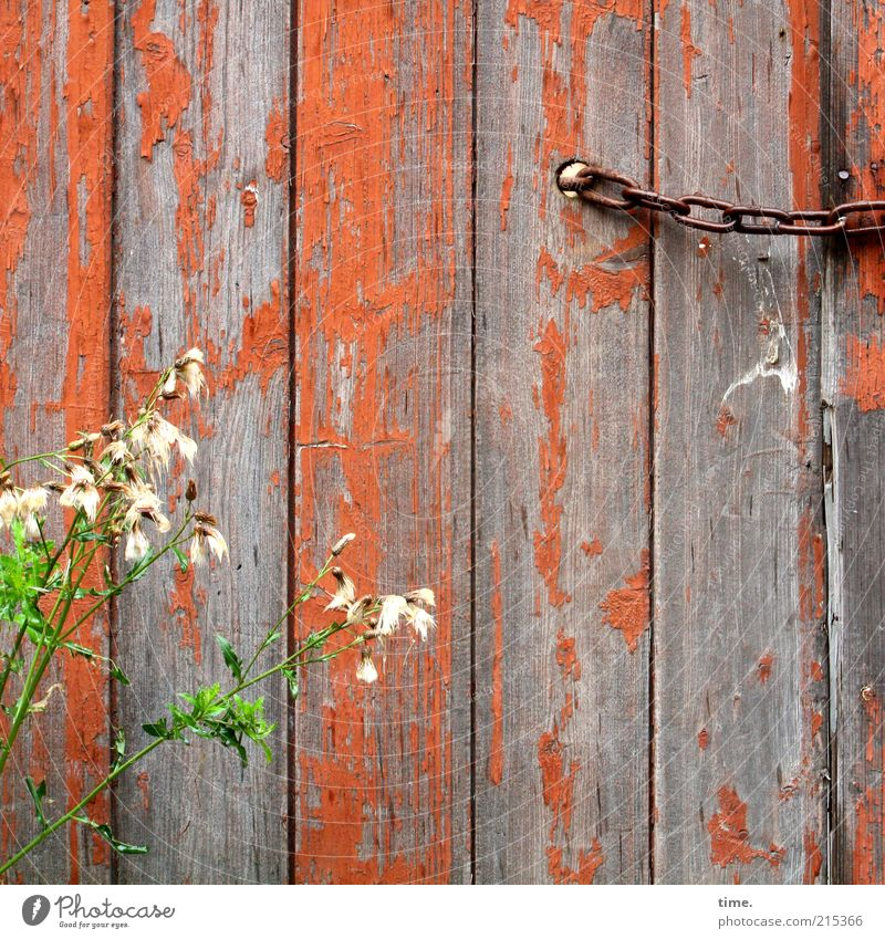 Young & Old Wooden board Wooden wall Exterior shot Deserted Orange Chain Plant Blossom Green Hoarding Hut Closed Blossoming Derelict Flake off Colour Dye