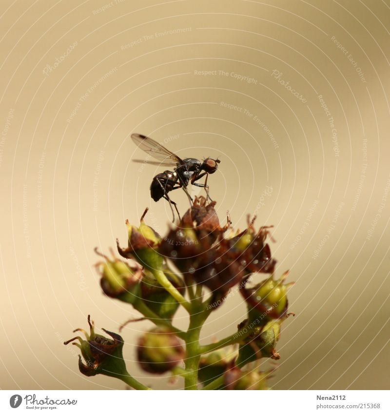 Nature Flower Plant Animal Blossom Small Fly Tall Sit Bushes Wing Insect Departure Ant Wild plant