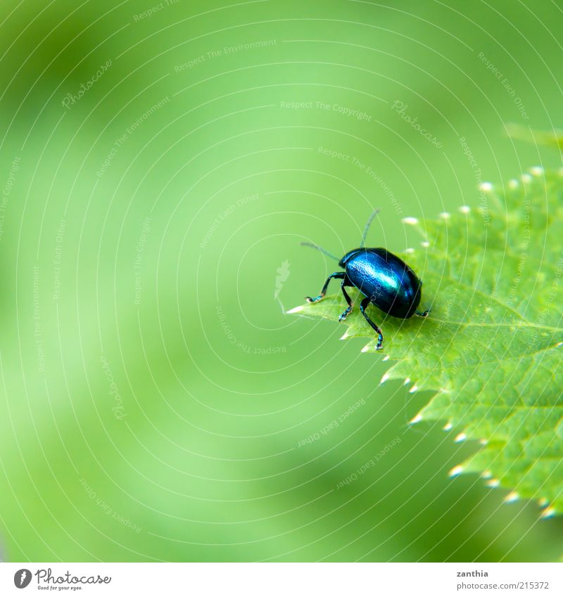over the edge Nature Spring Summer Plant Leaf Foliage plant Animal Beetle 1 Looking Sit Wait Far-off places Small Near Curiosity Blue Green Interest Hope