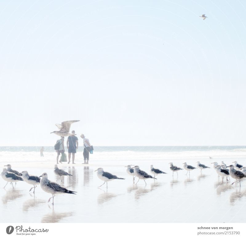gallant Ocean Beach Human being Water Sun Summer Bright Far-off places Calm Time Vacation & Travel Seagull Animal Bird Maritime Direction Looking