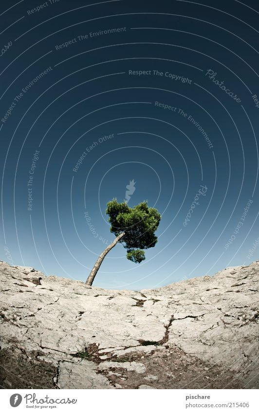 Nature Sky Tree Summer Loneliness Stone Landscape Environment Rock Desert Transience Individual Environmental protection Blue sky Drought Curved