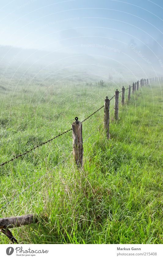 morning fog Nature Landscape Air Fog Meadow Green Germany Morning Dawn Morning fog Barbed wire fence Fence Fence post Bavaria Colour photo Subdued colour