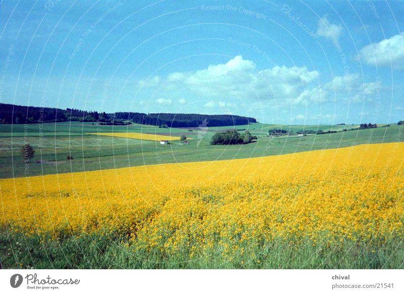 summer landscape Canola field Meadow Forest Field Clouds