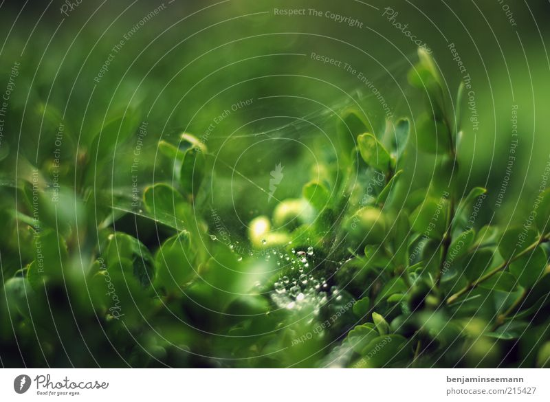 Nature Green Plant Leaf Black Drops of water Bushes Spider's web Foliage plant Macro (Extreme close-up) Light Water Morning
