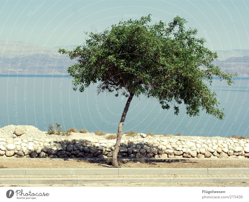 Nature Water Tree Ocean Summer Loneliness Life Wall (barrier) Warmth Landscape Weather Environment Growth Simple Climate Beautiful weather