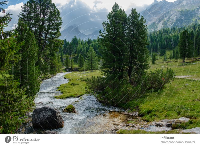 in the Dolomites Vacation & Travel Freedom Summer Mountain Landscape Water Clouds Tree Meadow Forest Hill Rock Alps Brook Italy Esthetic Natural Blue Gray Green