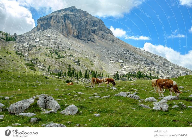 in the Dolomites Vacation & Travel Freedom Mountain Hiking Landscape Clouds Grass Meadow Hill Rock Alps Peak Italy Farm animal Cow Cattleherd Group of animals