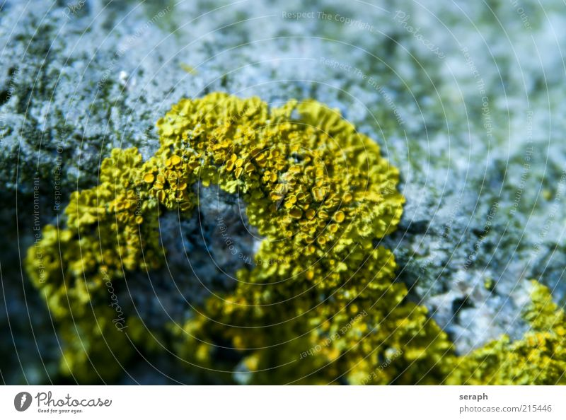 Lichen Growth Stone Plant Yellow Spore Mushroom Symbiosis Earth Nature sporophyte Verdant Macro (Extreme close-up) Detail Floral Leaf green Colour photo