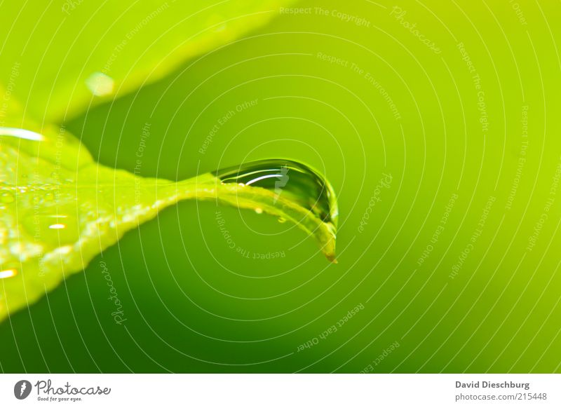 green & green Life Harmonious Nature Plant Water Drops of water Spring Summer Weather Rain Leaf Foliage plant Green Wet Dew Damp Glittering Round Colour photo