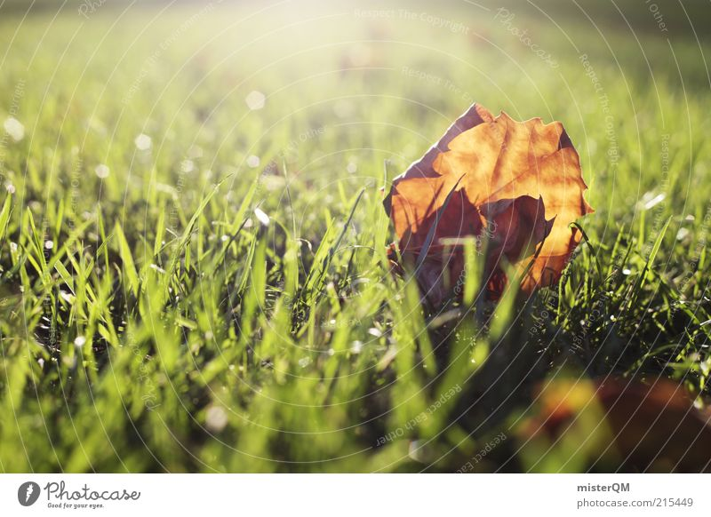 Autumn light. Environment Nature Esthetic Autumn leaves Autumnal Autumnal colours Early fall Leaf Lawn Grass Seasons November Brown Calm Flare Shaft of light