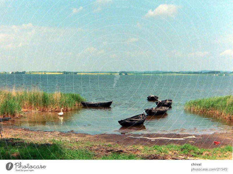 Bodden landscape Ocean Lake Swan Watercraft Marsh Common Reed Sky Far-off places