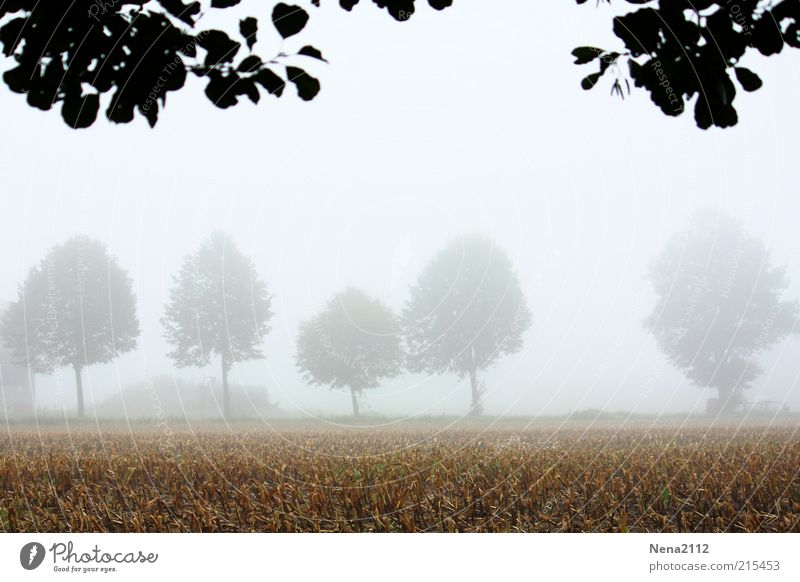 Nature Sky White Tree Leaf Cold Autumn Landscape Bright Field Fog Weather Environment Wet Earth Fresh