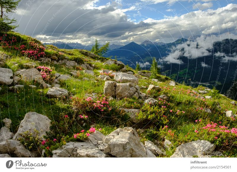 in the Dolomites Vacation & Travel Summer Mountain Hiking Nature Landscape Clouds Grass Bushes Blossom Meadow Rock Alps Italy Natural Blue Green Pink Beautiful