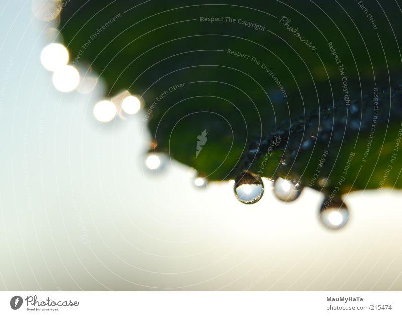 Drops per sheet Nature Plant Elements Air Water Drops of water Sky Horizon Sun Sunlight Autumn Leaf Cool (slang) Optimism Might Determination Elegant Energy