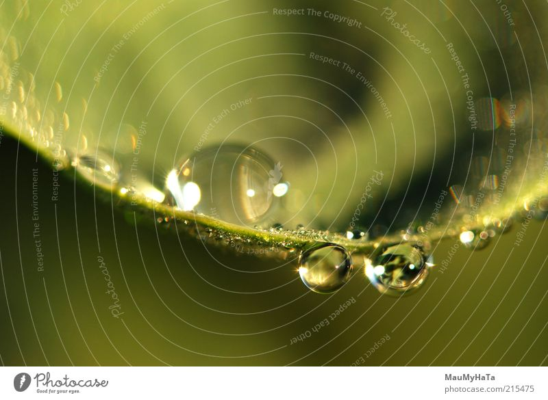 Water drops Nature Water Plant Sun Leaf Far-off places Relaxation Autumn Life Cold Grass Style Art Power Drops of water Climate