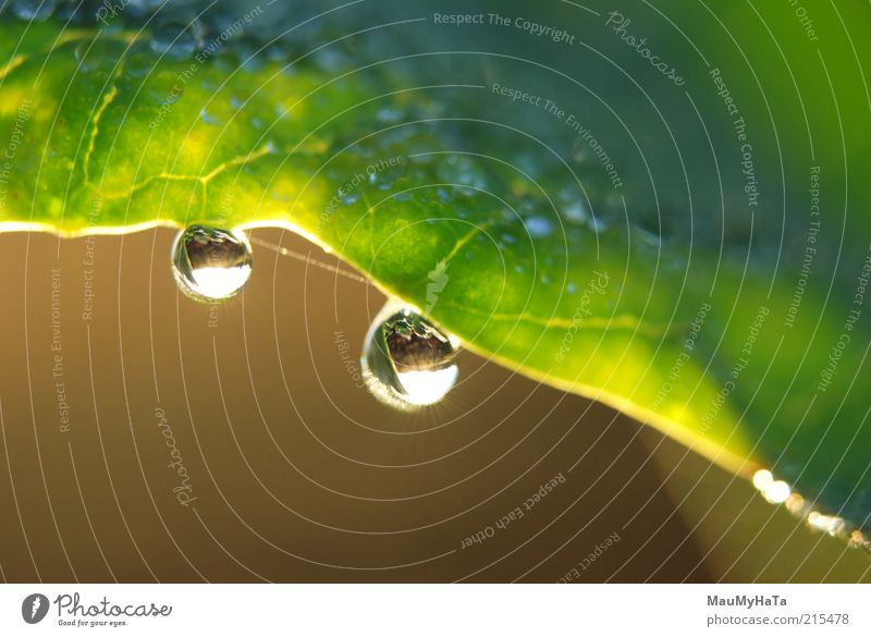 Water droplets on leaf Nature Plant Elements Drops of water Sky Horizon Sun Sunrise Sunset Sunlight Autumn Climate Grass Leaf Paying Rotate Discover Looking